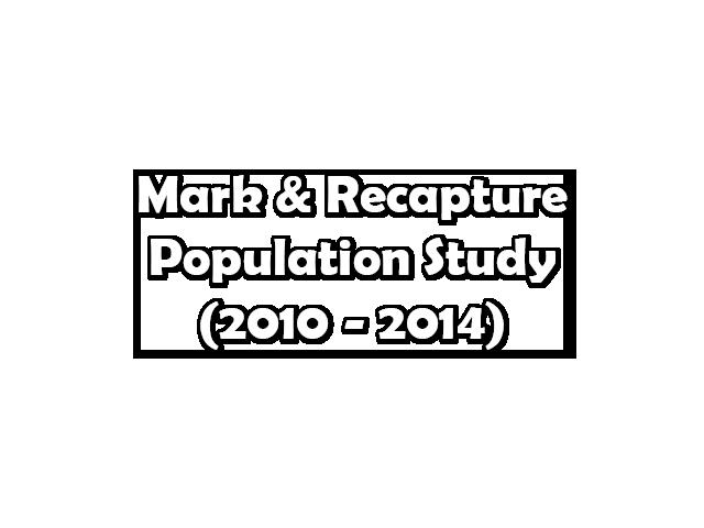 Mark & Recapture Population Study