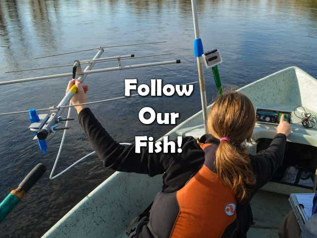 Follow Our Fish!